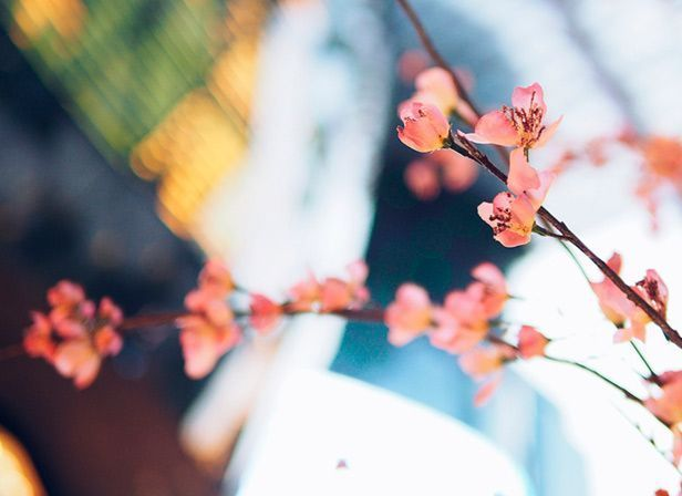 mireia hurtado mindfulness